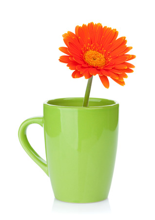 orange gerbera: Orange gerbera flower in tea cup. Isolated on white background Stock Photo