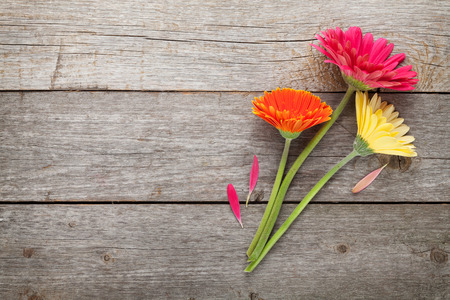 orange gerbera: Three colorful gerbera flowers on wooden table with copy space Stock Photo