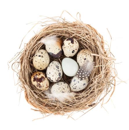 huevos de codorniz: Huevos de codorniz nido. Aislado en el fondo blanco Foto de archivo
