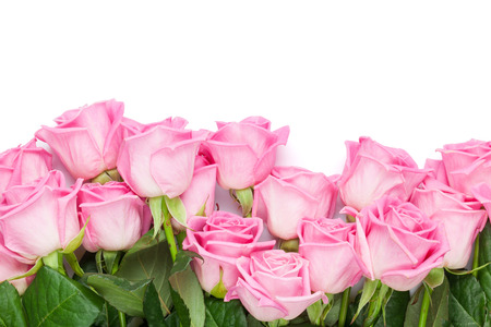 Valentines day background with pink roses. Isolated on white. Top view with copy space Stock Photo