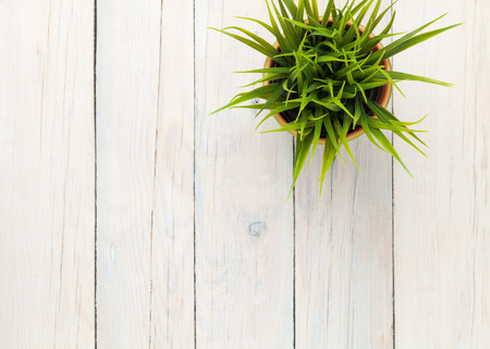 Potted grass flower over wooden table background with copy space Stock Photo