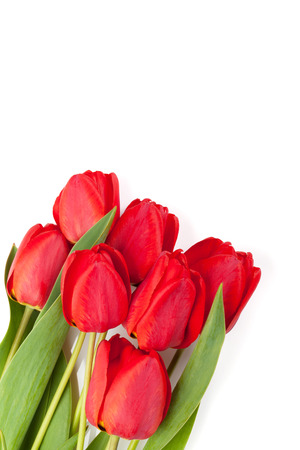 Fresh red tulips bouquet isolated on white background with copy space photo