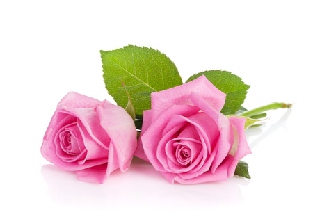 Two pink rose flowers. Isolated on white  Standard-Bild
