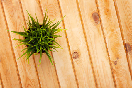 potted plants: Potted grass flower over wooden table background with copy space Stock Photo
