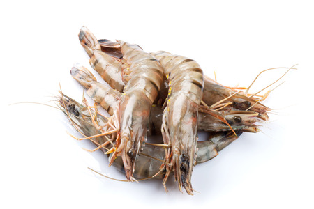 Fresh raw tiger prawns. Isolated on white background
