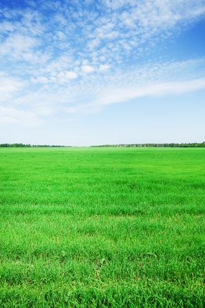 vetical: Green grass field and blue sky background