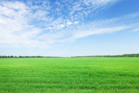 Groen grasgebied en blauwe hemelachtergrond