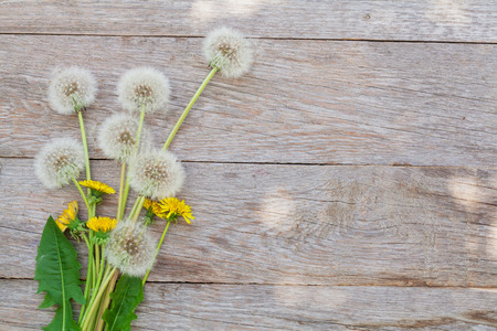 wood texture: Dandelion flowers on wooden background with copy space