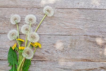 textura madera: Flores de diente de le�n en el fondo de madera con espacio de copia