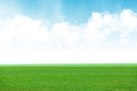 Groen grasveld en de blauwe hemel achtergrond