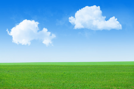 grass and sky: Green grass field and blue sky background