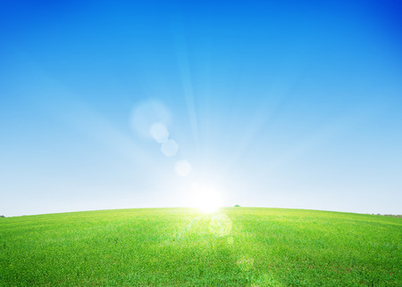 grass: Endless green grass field and deep blue sky background Stock Photo