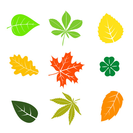 Colorful autumn leaves set on white Stock Illustratie