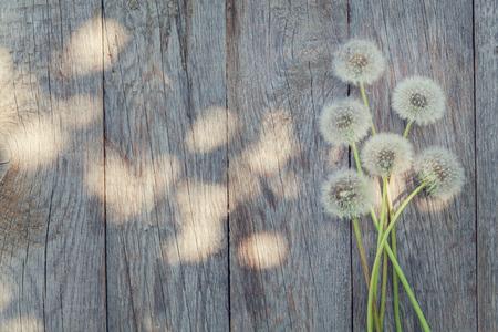 NATURE: Flores de diente de león en el fondo de madera con espacio de copia