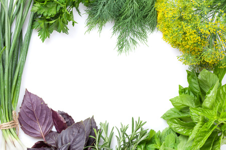 seasoning: Fresh garden herbs frame. Isolated on white background