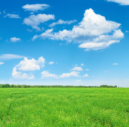 Summer landscape with green grass field and blue sky with clouds Stock Photo