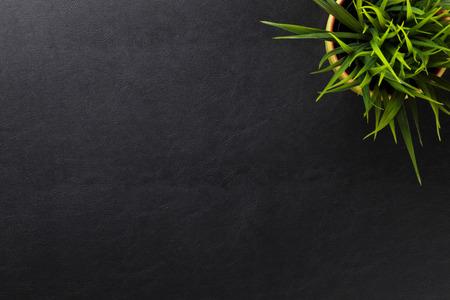 Kancelářské kožené stůl stůl s květinou. Pohled shora s kopií vesmíru