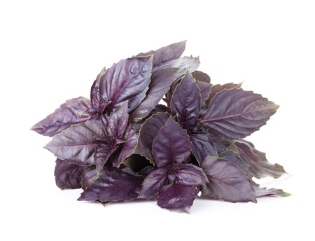 Fresh garden herbs. Purple basil. Isolated on white background Stock Photo