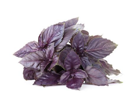 albahaca: Hierbas frescas del jardín. Albahaca púrpura. Aislado en el fondo blanco Foto de archivo
