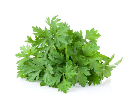 organic plants: Fresh garden herbs. Parsley. Isolated on white background Stock Photo