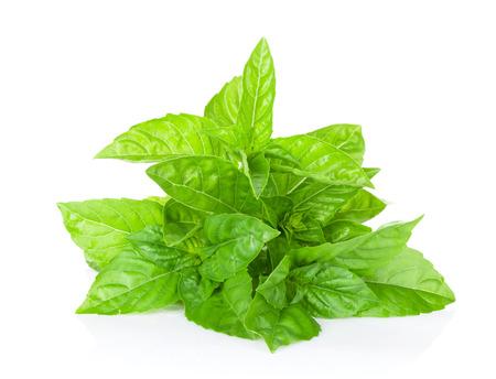 green herbs: Fresh garden herbs. Green basil. Isolated on white background Stock Photo