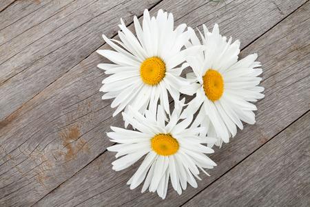 p�querette: Fleurs de camomille Daisy sur table en bois de fond avec copie espace