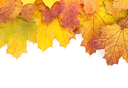 isolated on white: Colorful autumn maple leaves frame. Isolated on white background