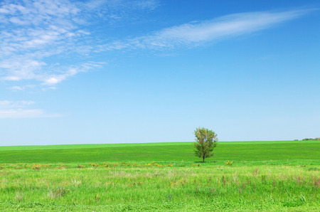 blue green landscape: Summer landscape with green grass field and blue sky