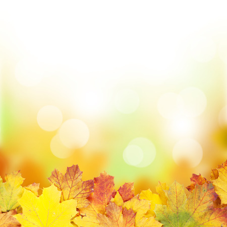 Autumn background with maple leaves and sunny bokeh Stok Fotoğraf
