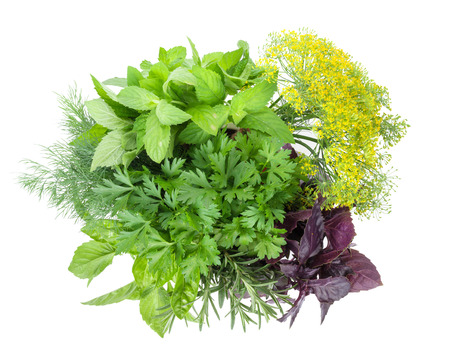 fresh green: Fresh garden herbs. Isolated on white background Stock Photo