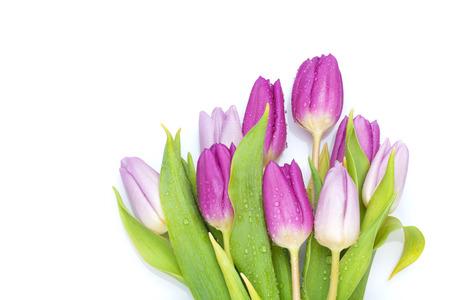 보라색 튤립 꽃다발입니다. 흰색 배경에 고립