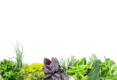Fresh garden herbs. Isolated on white background 스톡 콘텐츠