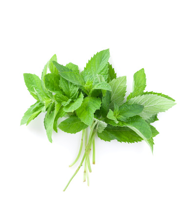 Fresh garden herbs. Mint. Isolated on white background