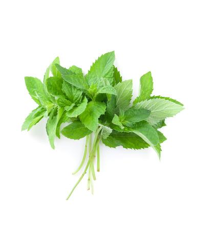 fresh leaf: Fresh garden herbs. Mint. Isolated on white background