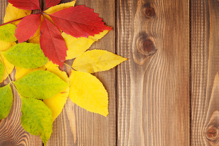 space wood: Colorful autumn leaves over wood background with copy space