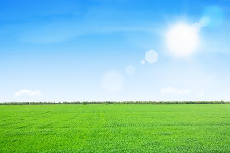 Groen grasveld en blauwe lucht met zon Stockfoto