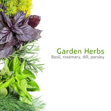 Fresh garden herbs. Isolated on white background Stok Fotoğraf