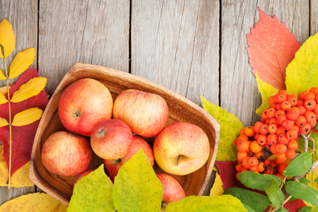 fall leaf: Autumn leaves, rowan berries and apples over wood background with copy space Stock Photo