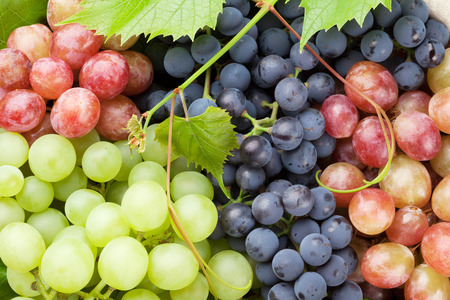 Bunch of colorful grapes with leaves