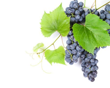 Grappe de raisin avec des feuilles rouges. Isolé sur fond blanc avec copie espace Banque d'images - 45026437