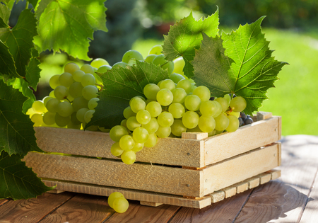 Vine and bunch of white grapes on garden table