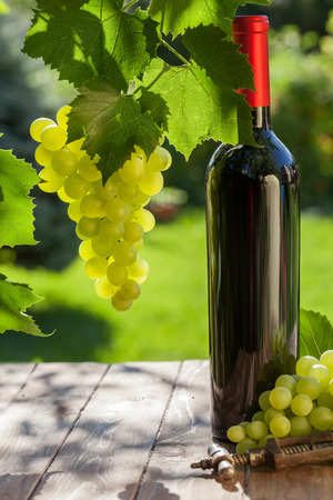 bottle of vine: Red wine bottle, vine and bunch of grapes on garden table