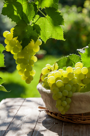 grapes: White grapes in basket on garden table Stock Photo