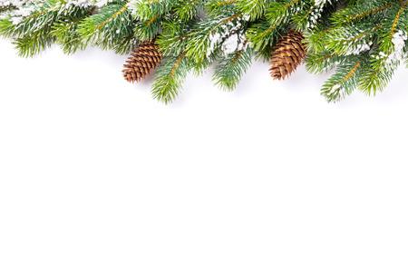Tak van de kerstboom met sneeuw en dennenappels. Geïsoleerd op een witte achtergrond met een kopie ruimte Stockfoto