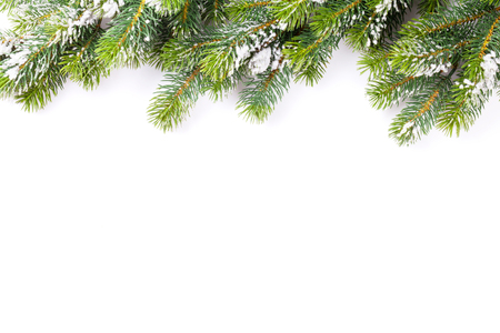 tree decorations: Christmas tree branch with snow. Isolated on white background with copy space