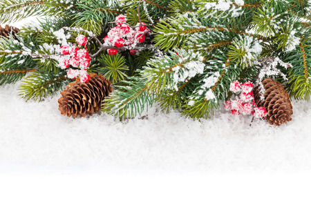 green frame: Christmas fir tree branch with holly berry and snow