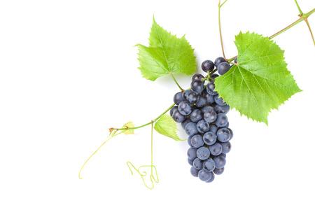 vid: Racimo de uvas rojas con las hojas. Aislado en fondo blanco con espacio de copia