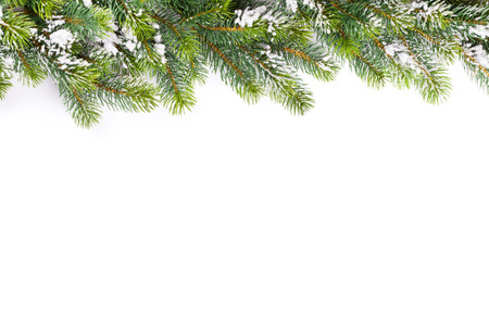 christmas tree background: Christmas tree branch with snow. Isolated on white background with copy space