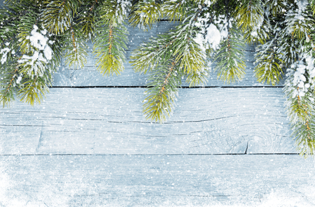 snow and trees: Old wood texture with snow and firtree christmas background