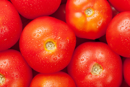 tomate: Fresh garden red tomatoes. Closeup texture